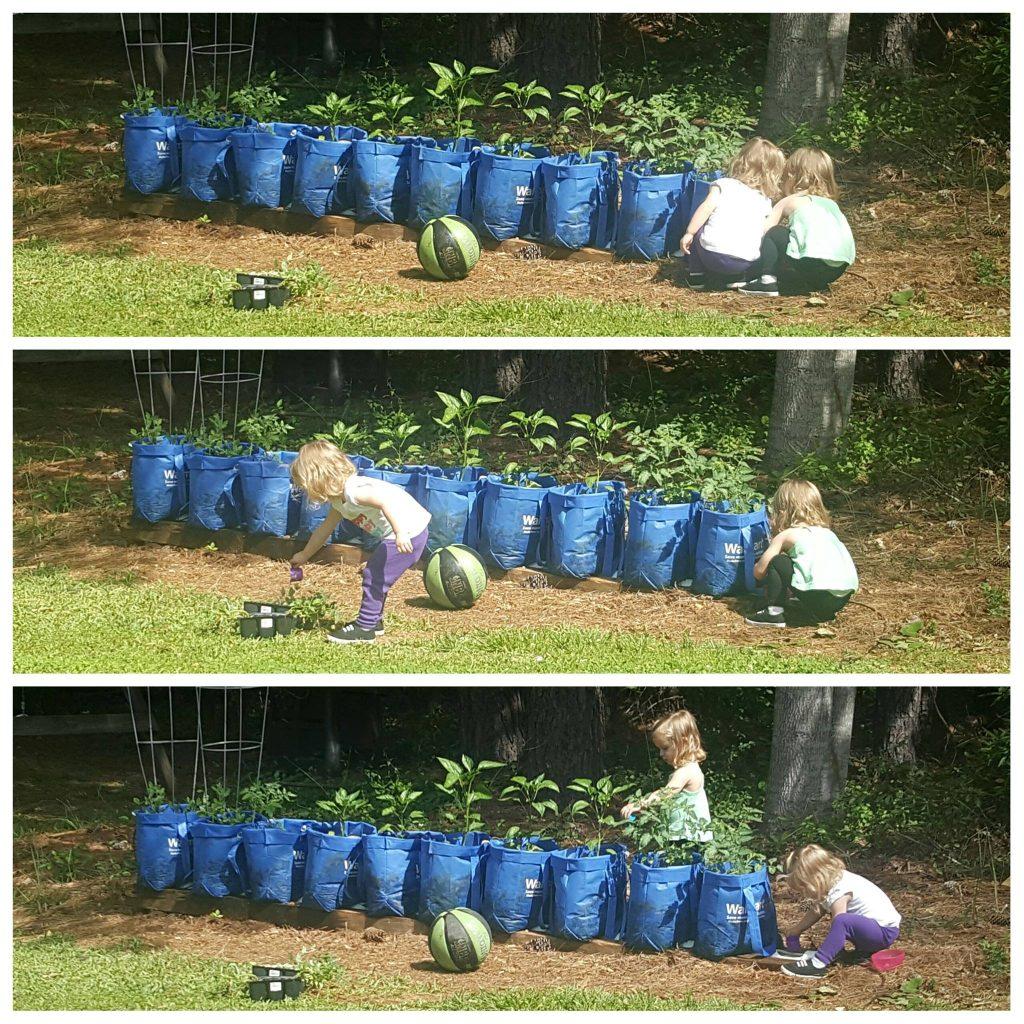 planting a veggie garden