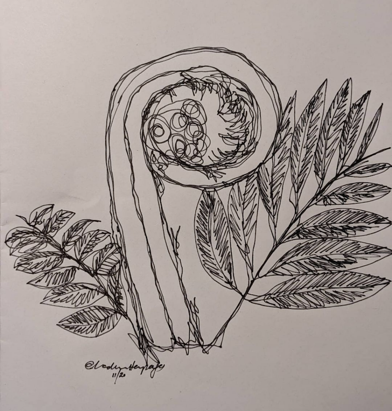 nature sketch fern line drawing